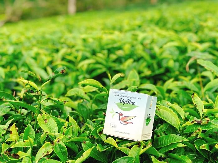Với 100% thảo mộc thiên nhiên, nên trà giảm cân Vy Tea không có tác dụng phụ cho người sử dụng.