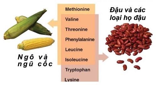 Nguồn thực phẩm giàu protein cũng như BCAA.